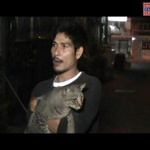 Конфликт между соседями из-за кошки