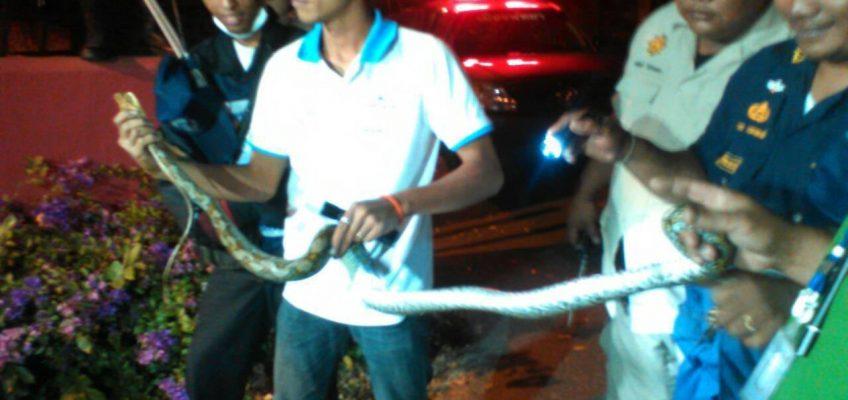 Поймали змею на холме Пратамнак