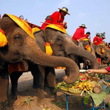 13 Марта, 2015 Национальный день тайского слона в саду Нонг Нуч
