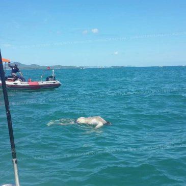 Тело пропавшего американца найдено в море
