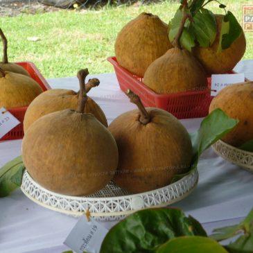 Сантол: ещё один тайский фрукт