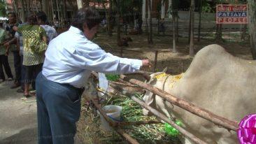 Освобождение животных в Паттайе