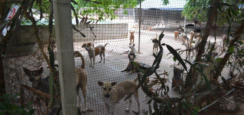 Центр для бездомных собак в Паттайе (4)