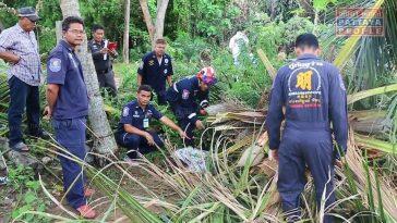 Упавшее дерево убило старика в Паттайе
