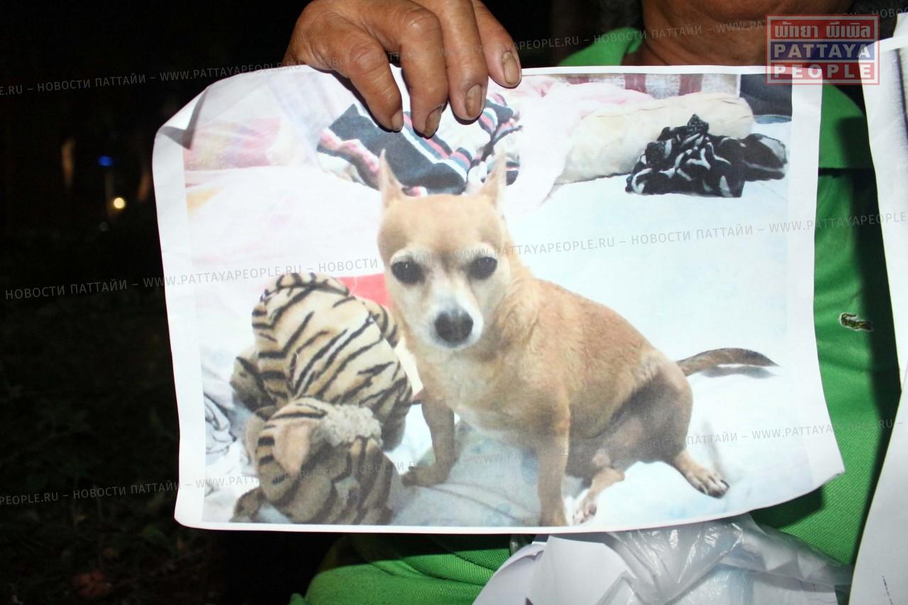 В Паттайе пропала собака. Нашедшему - вознаграждение! (2)
