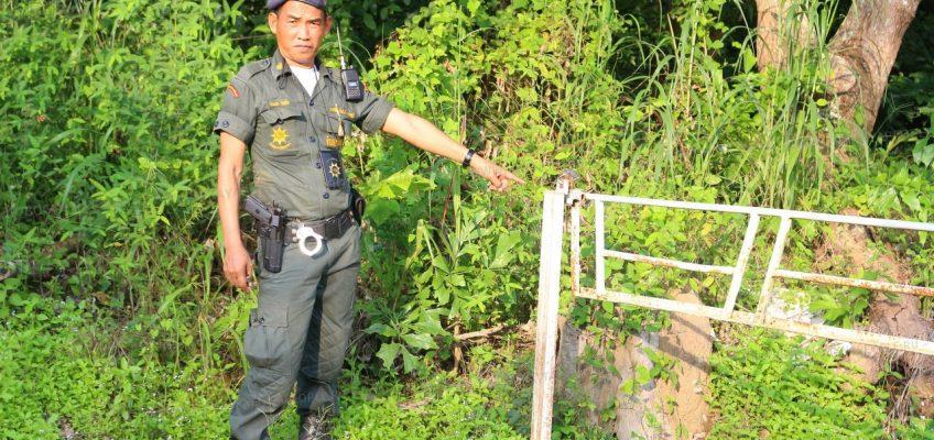 В Национальном парке в Таиланде незаконно выращивают грибы
