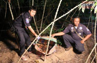 В Паттайе найдено два тела