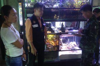 Бизнес-вумен завела себе двух леопардов в офисе в Паттайе