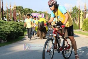 велопробег Bike For Dad Паттайя