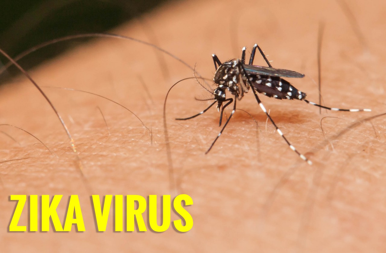 Вирус Зика в Таиланде