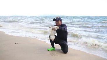 медузы в Паттайе