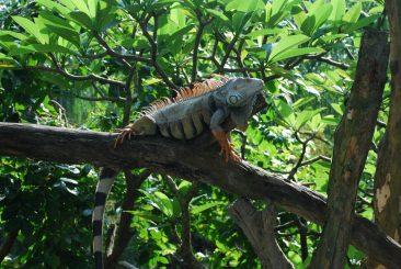 Открытый зоопарк Кхао Кхео, Таиланд