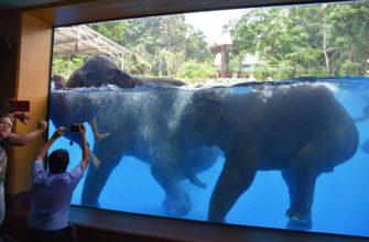 Подводное шоу слонов в зоопарке Кхао Кхео