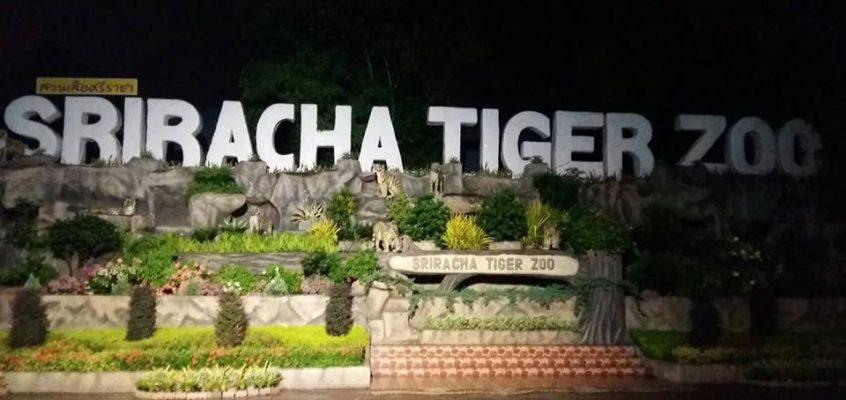 В тигровом зоопарке пропала туристка из Китая