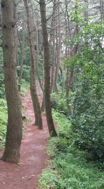 Южная Корея, Пусан, Moontan Trail