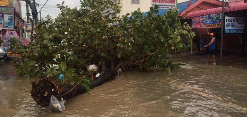 Дожди в Паттайе валят деревья (видео)