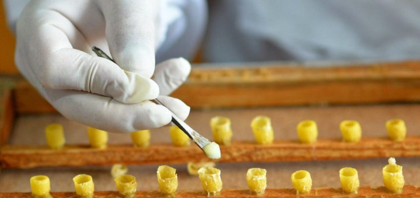 Пчелиное маточное молочко — бесплатно из Таиланда