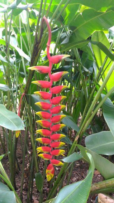 Сингапур парк орхидей