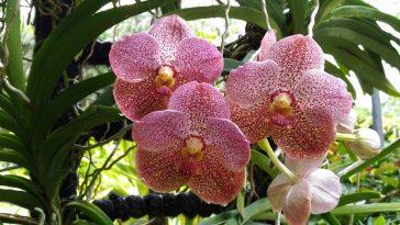 Сингапур — парк Орхидей