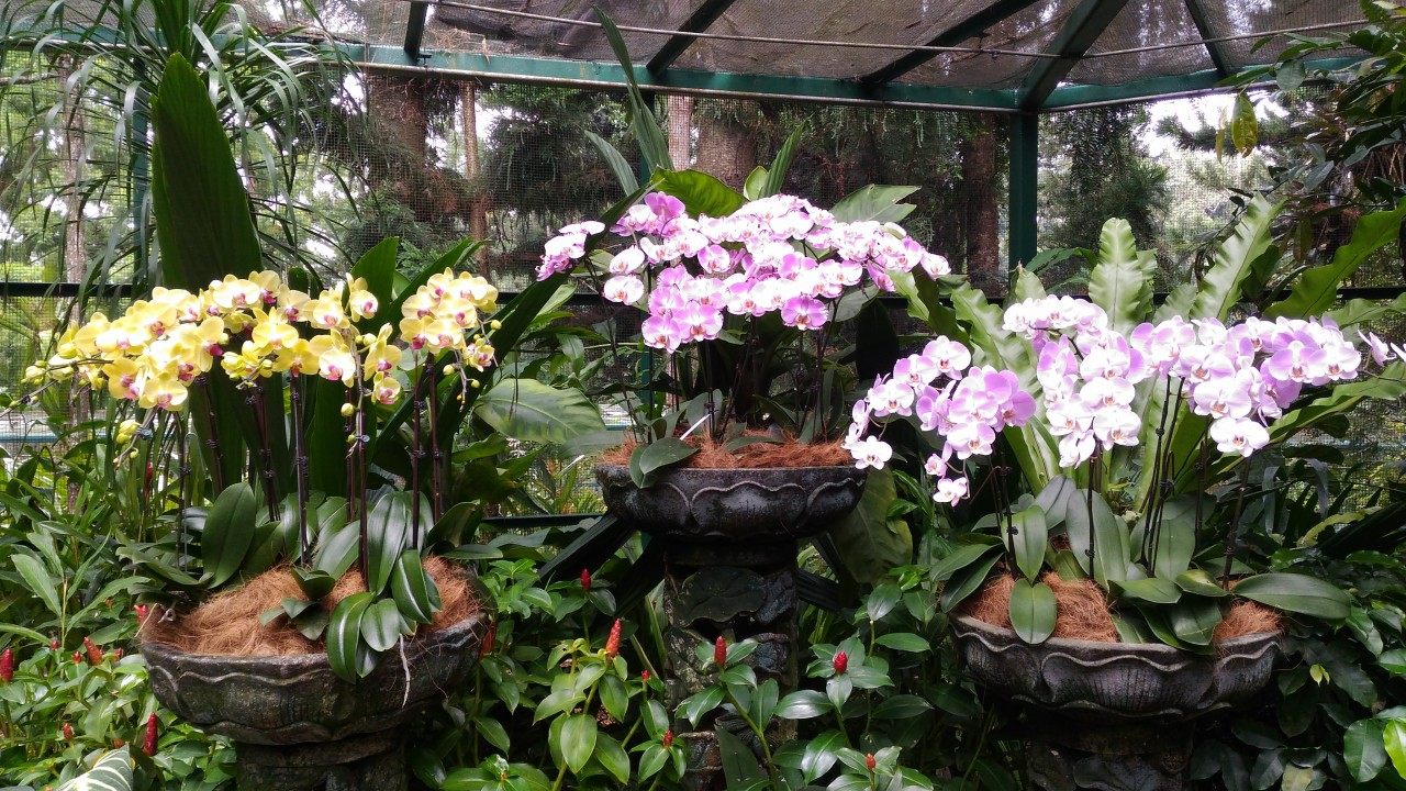 сад орхидей в сингапуре фото знают это никогда