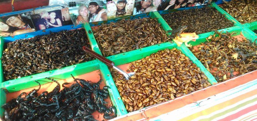 Тайские тараканы отправятся в Европу в качестве еды