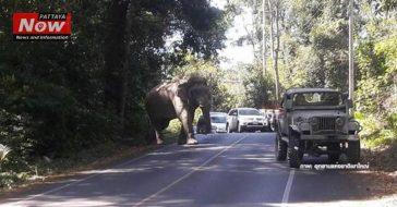 Бешеный слон в парке Khao Yai – будьте осторожны