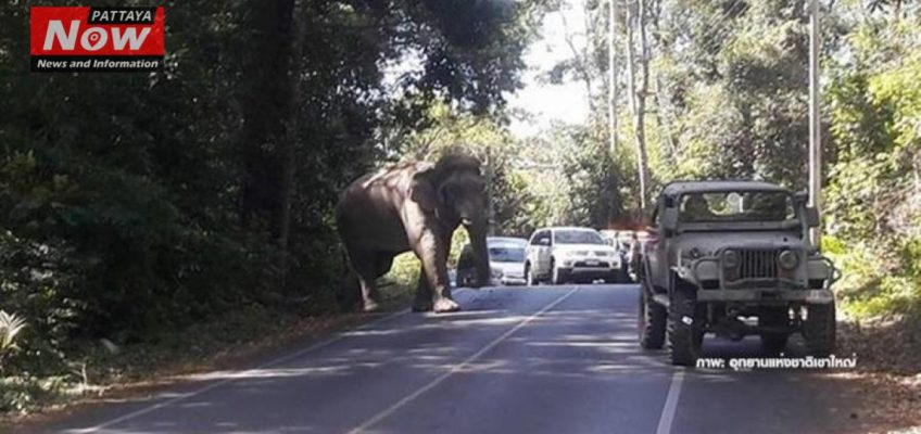 Бешеный слон в парке Кхао Яй