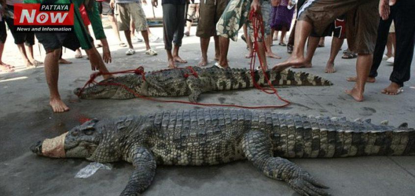 Из-за наводнения в Таиланде из зоопарка сбежали крокодилы