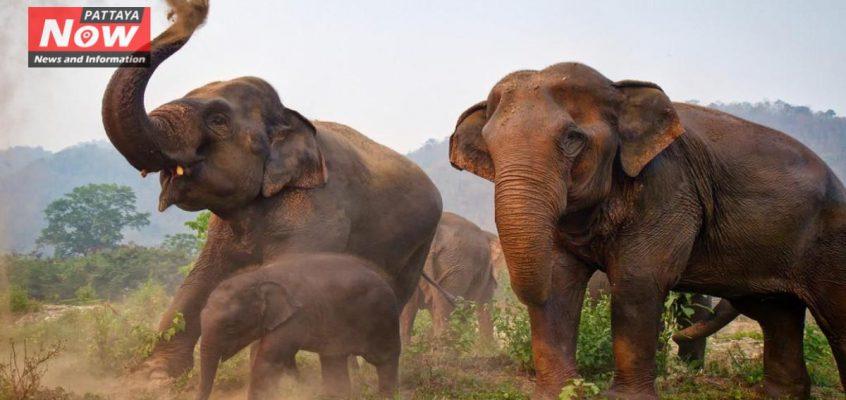 Слоны вышли на массовый протест в Таиланде