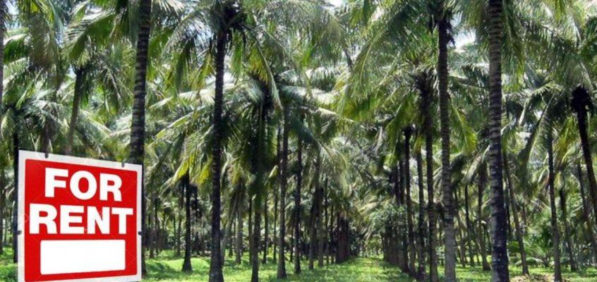 Иностранцы смогут арендовать землю в Таиланде на 50 лет