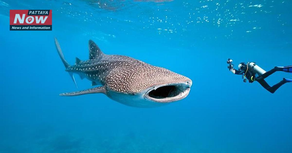 Whale shark wedding