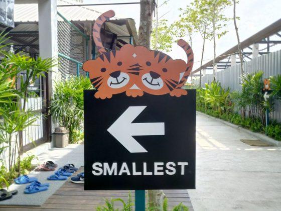 Тигровый зоопарк в Паттайе Tiger Park Pattaya