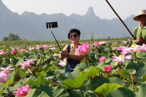 Озеро священных лотосов в Таиланде
