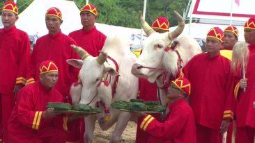 Праздник первой борозды в Таиланде