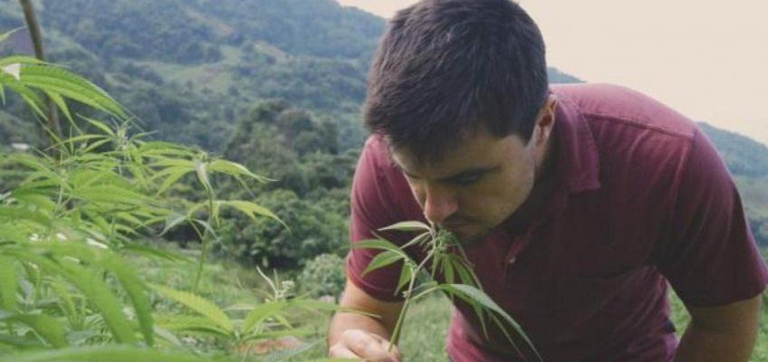 Сериал о марихуане в Таиланде