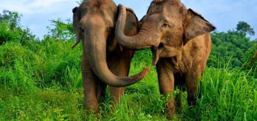 7 самых удивительных диких животных Таиланда (и места их обитания)