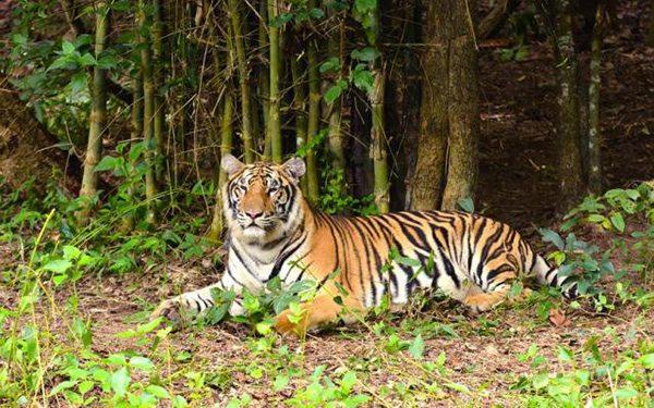 дикие животные Таиланда