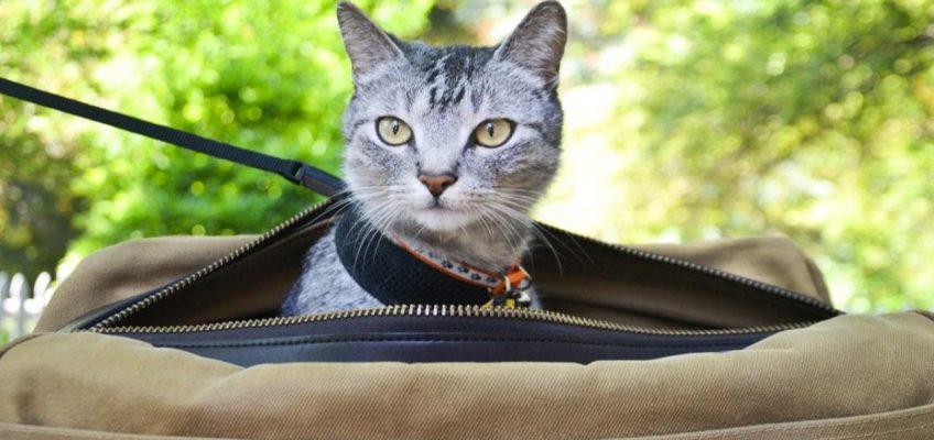 Как мы летели с кошкой в Таиланд — опыт прохождения границы