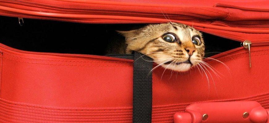 Кошачьи мытарства - путешествие в Таиланд
