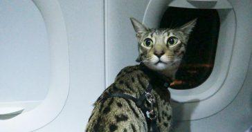 С кошкой в самолете - как мы летели в Таиланд