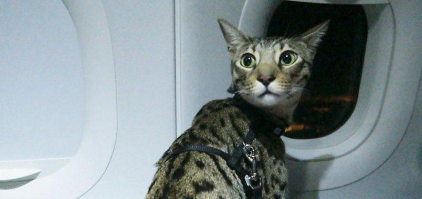 С кошкой в самолете — как мы летели в Таиланд