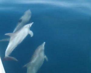 Дельфины в Таиланде
