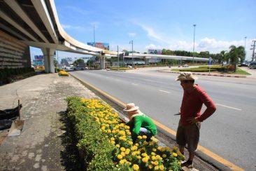 В Таиланде высаживают тысячи желтых бархатцев к похоронам Короля Пхумипона Адульядета
