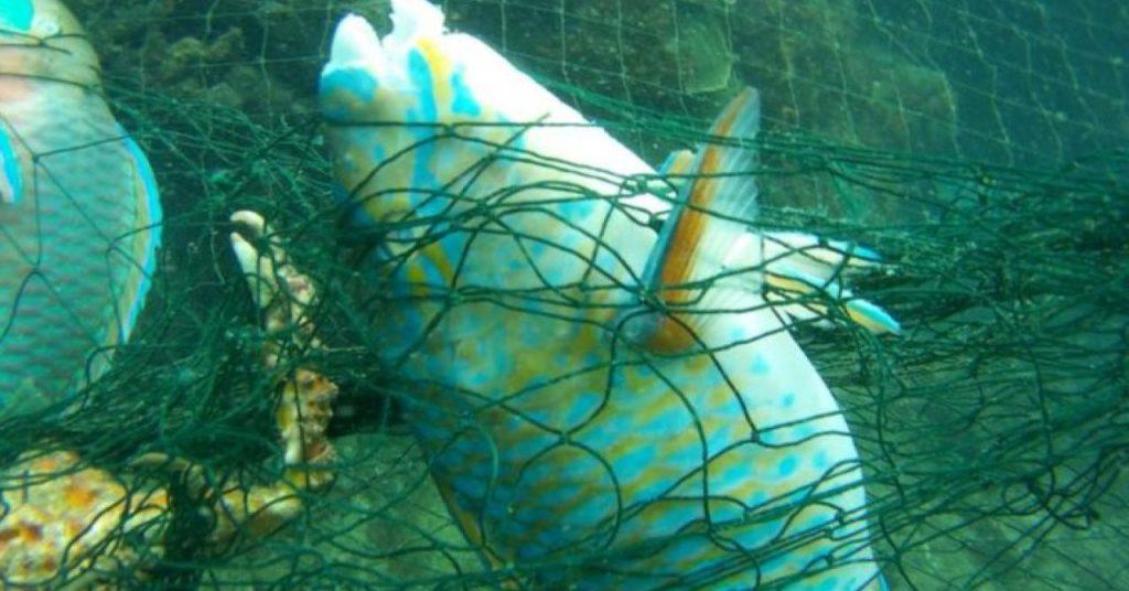 На Краби в Таиланде дайверы освободили рыб из сетей