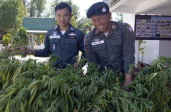 В Таиланде требуют построить ферму по выращиванию конопли