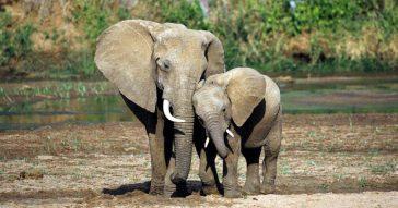 Беда со слонами в Таиланде