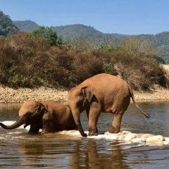 День слона в Таиланде — все на праздник! (ВИДЕО)