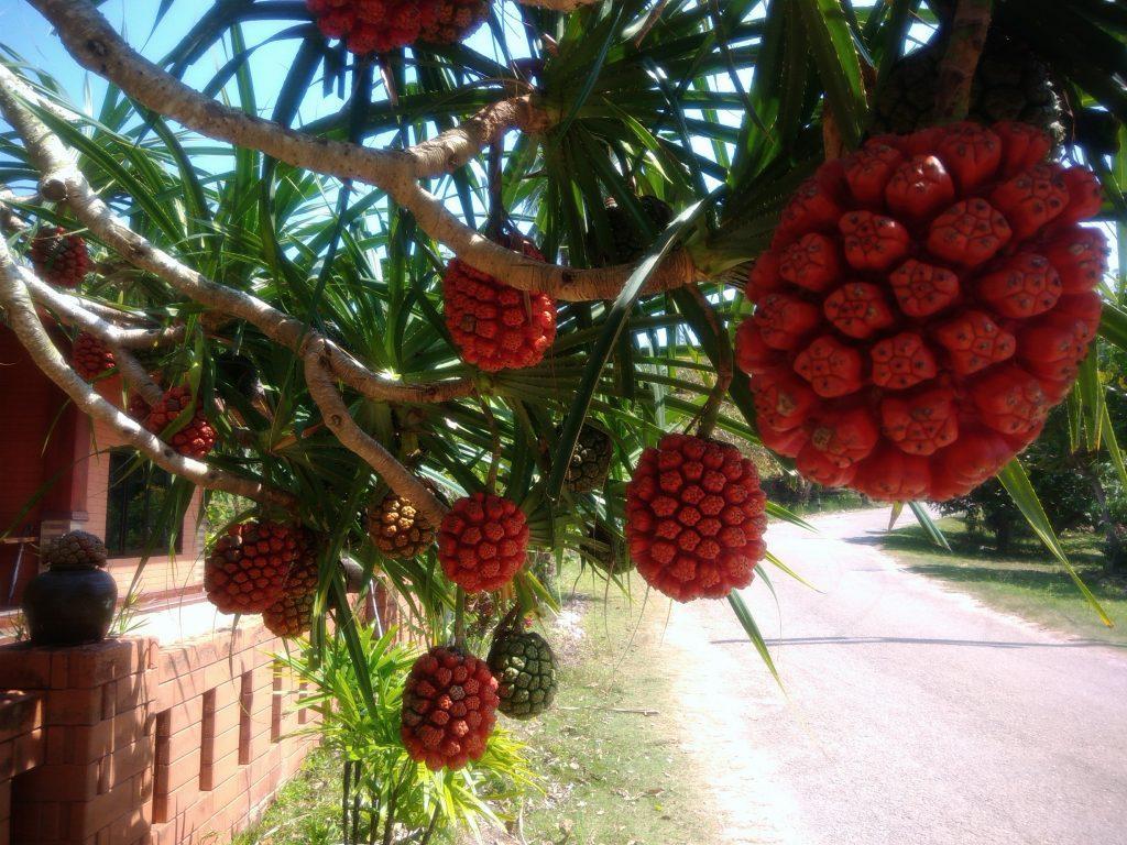Фестиваль фруктов в Таиланде
