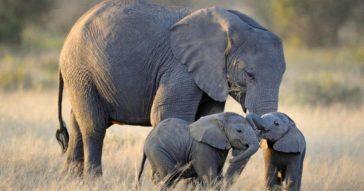 Где слону жить хорошо - в Таиланде!