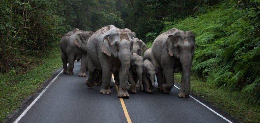 Как себя вести при встрече с диким слоном в Таиланде